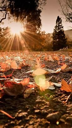 Iphone Xr Hd Wallpaper Autumn