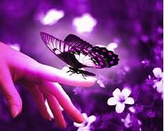 Weißer Schmetterling Bedeutung - die esoterische bedeutung des schmetterlings