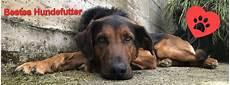 Welches Hundefutter Ist Das Beste - bestes hundefutter deinem hund zuliebe