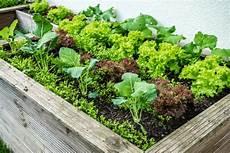 hochbeet richtig bepflanzen 10 cool season plants you can grow today ready gardens