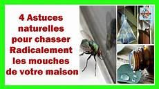 chasser les mouches 4 astuces naturelles pour chasser radicalement les mouches de votre maison