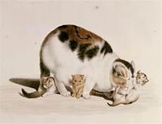Malvorlage Katze Mit Jungen Katze Mit Drei Jungen Gottfried Mind Als Kunstdruck Oder
