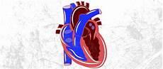 Alat Peredaran Darah Manusia Bangkusekolah