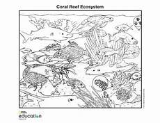 coloring pages ecosystem animals 16973 coloring pages national geographic society