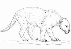 ausmalbilder ausmalbilder jaguar zum ausdrucken