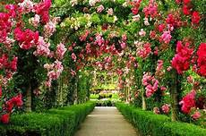 Gambar Foto Taman Bunga Ideku Unik