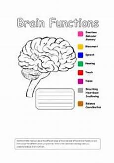 human brain functions esl worksheet by iman bendjedidi