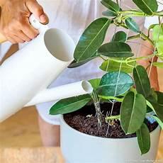 comment arroser ses plantes pendant les vacances comment faire refleurir vos plantes d int 233 rieur
