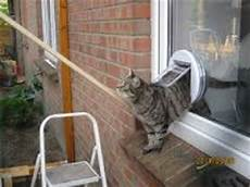 cat flaps coventry flaps cat flap installers