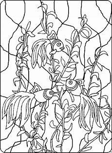 regenbogenfische ausmalbild malvorlage tiere