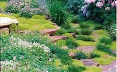 plantes vivaces pour talus couvre sols et talus vente plantes couvre sol et plantes