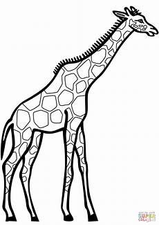 giraffe drawing at getdrawings free