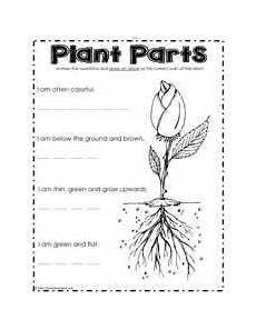science plants worksheets for 3rd grade 13627 what are the plant parts parts of a plant teaching plants plants