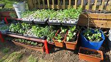 my first container garden shelving container up making soil planting fertilizing