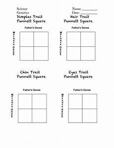 punnett squares handout pdf for the classroom