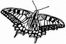 Ausmalbild Schmetterling Pfauenauge Tierstempel Heimische Tiere Insekten Raupen