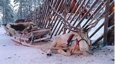 festlich in finnland 365 tage weihnachten am polarkreis