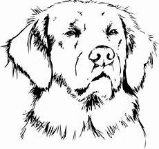 Ausmalbilder Hunde Golden Retriever Fototapete Golden Retriever Pixers 174 Wir Leben Um Zu