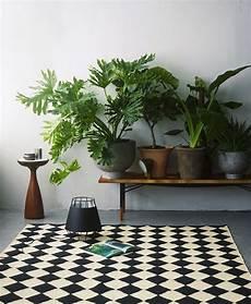 le 12 piante da appartamento must secondo