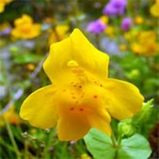 fiori di bach ipertensione schede sintetiche dei 38 fiori di bach e rescue remedy