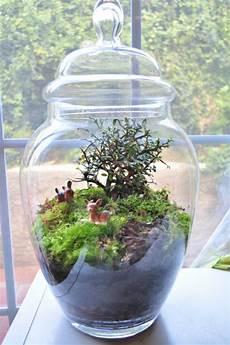 terrarium selbst bauen oder wie erstellt eine mini