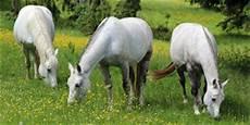 Op Versicherung Pferd - bei hitze das pferd duschen so geht s