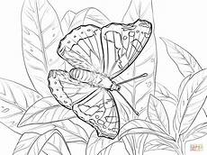 admiral coloring page free printable coloring pages