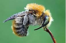was machen wespen im winter bienen im winter nabu mecklenburg vorpommern
