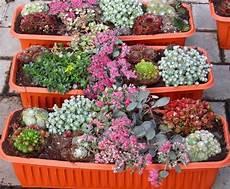balkonpflanzen herbst winter winterpflanzen f 252 r balkon