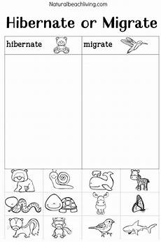 you ll these winter animals for preschool ideas animal activities for animals that