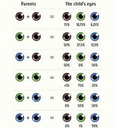 grün braune augen häufigkeit all about the human eye color chart