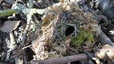 welcher vogel baut welches nest fr 252 hling kindertagespflege waldgeister jena