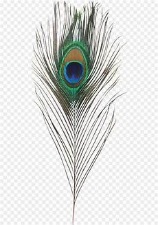 feather plume de paon peafowl clip peafowl png