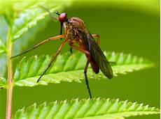 werden mücken vom licht angezogen effektives hausmittel gegen m 252 cken