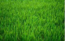 green grass background edible wafer paper full a4 sheet ebay
