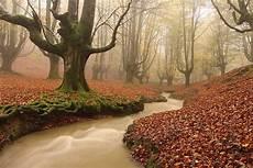 Paling Bagus 17 Foto Pemandangan Hutan Terindah Arka Gambar