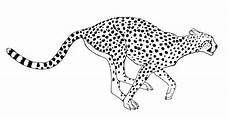 ausmalbilder gepard kostenlos coloring pages color
