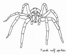 real spider coloring pages coloring pages