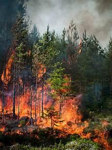 Ulala Gambar Kebakaran Hutan Yang Sangat Mengagumkan