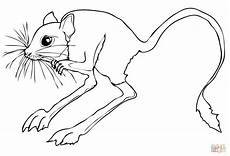 desert animals coloring pages printable 16950 desert animals coloring pages desert rodent jerboa coloring page superco animal coloring