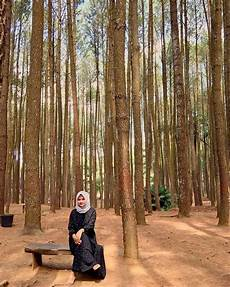 33 Background Pemandangan Hutan Pinus Kumpulan Gambar