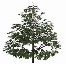 Pohon Untuk Gambar 3 Dimensi