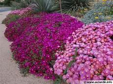 fleur vivace plein soleil massif fleurs vivaces plein soleil