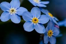blumen klein small blue flowers daniel flickr