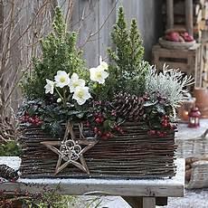 blumenkästen dekorieren winter winterliche christrosen deko winter weihnachten