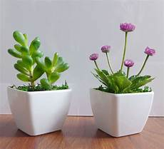 two potted artificial succulents yacon small flower plants home kitchen decor ebay