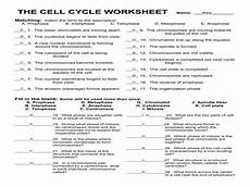 cell cycle worksheet homeschooldressage com