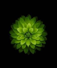 green flower iphone wallpaper hd green flower i green lotus wallpaper apple