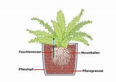 Hydrokultur F 252 R Zimmerpflanzen Mein Sch 246 Ner Garten