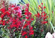 rote blumenrabatte bepflanzugsbeispiel kommunen